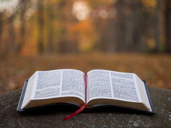 alasan membaca buku